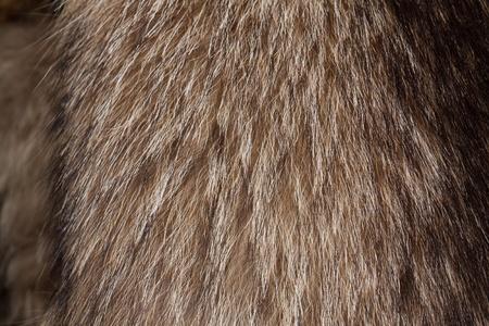 peltry: Raccoon dog fur. Useful as texture or background
