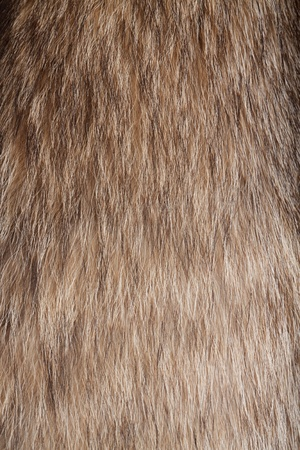 Raccoon dog fur. Useful as texture or background