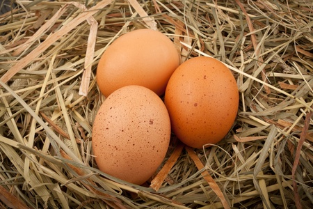 Fresh chicken eggs in straw nest