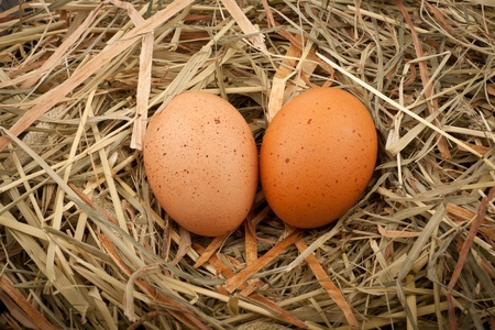Fresh chicken eggs in straw nest photo
