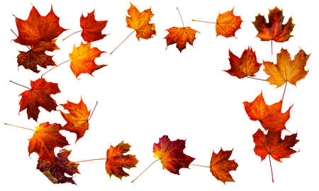 Colorful autumn leaves isolated on white background. Border frame of colorful maple leaves. Foto de archivo