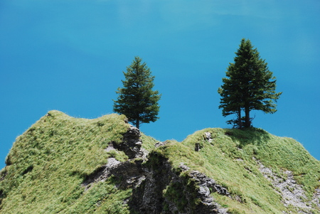 Two fir tree on a ridge and blue background