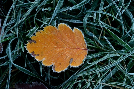 Frozen grass and orange brown leave Reklamní fotografie