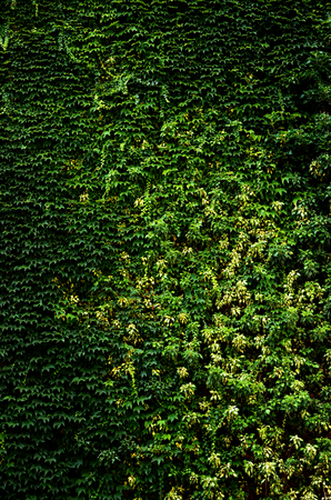 Green plants wall