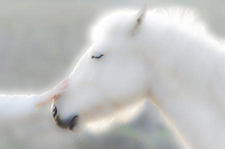 stunning: Fairytale