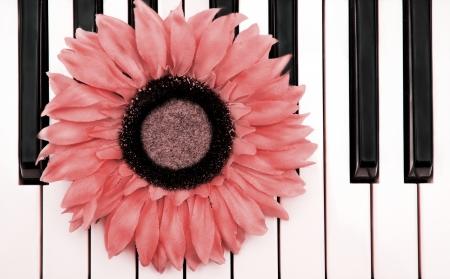 Piano Flower Stock Photo - 18735302