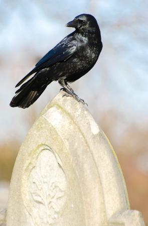 gotico: El Cuervo
