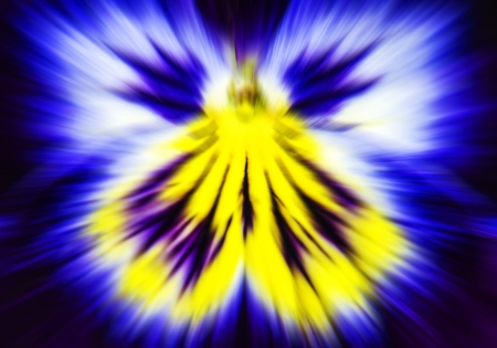 Abstract Flower photo