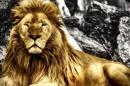 Der König Standard-Bild - 20141156