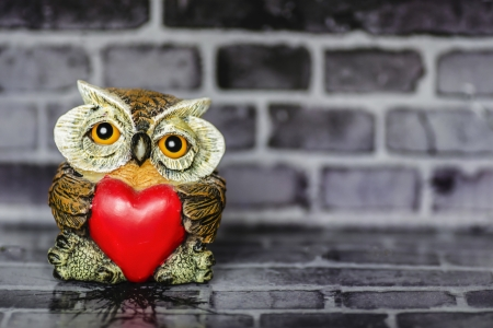 Owl in Love Standard-Bild - 24031020