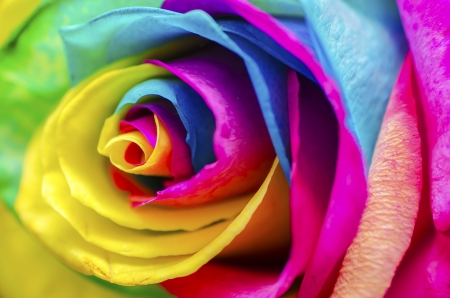 colourful: Poetic Colorful Rose