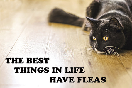 parole: The Best Things In Life Have Flease
