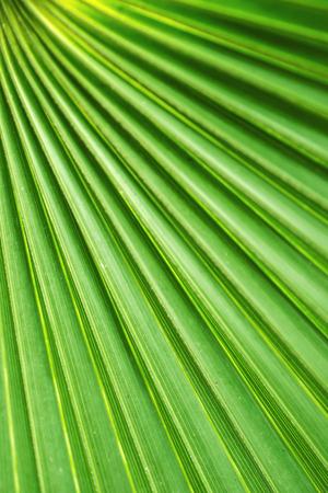 Abstract Palm Fan Standard-Bild