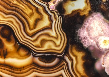 Turritella Achat Rosa Braun Muster Standard-Bild - 33680769