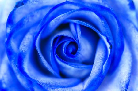 Abstract Blue Rose Standard-Bild - 37553193