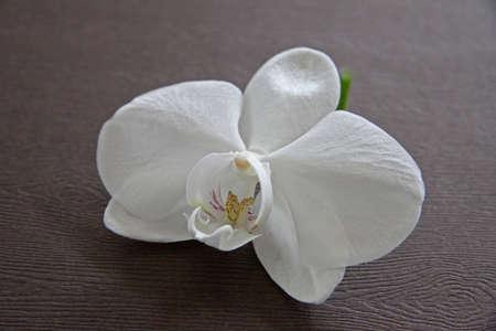 holz: orchidee auf holz