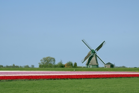 panoramics: Dutch tulips in the spring - Typical holiday pictures from the Netherlands Stock Photo