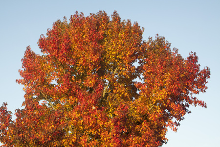 Beautiful tree with beautiful colored leaves in autumn Stock Photo