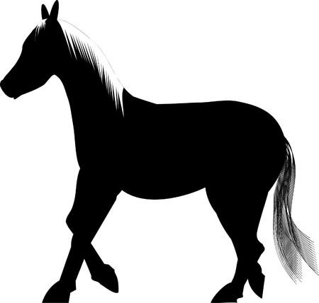 trot: Black horse on white background