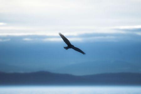 Silhouette of a flying hawk