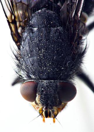 fly portrait Stock Photo