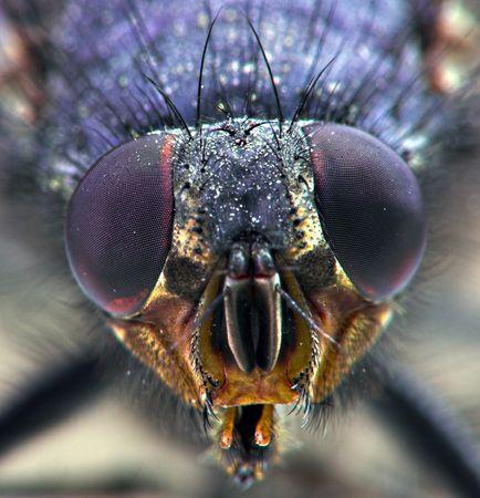 fly close-up photo