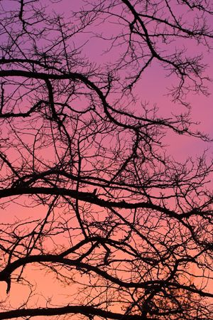 Silhouette tree branches taken during sunset Imagens