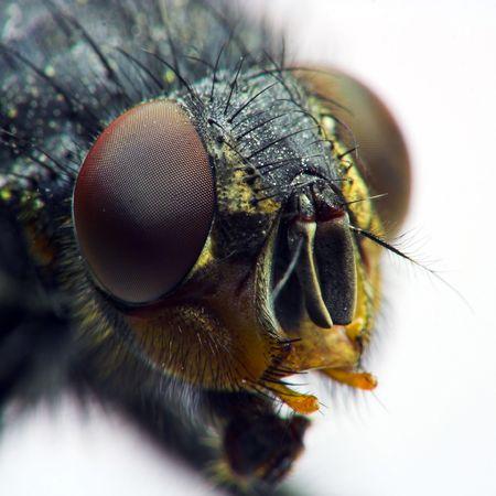 fly close-up Stock Photo