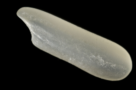 Extreme macro of a single grain of rice