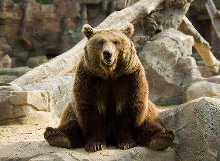 Brown bear sitting calmly in a funny pose on a rock Stock Photo
