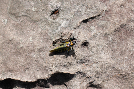 underwing: Bug life on the rock