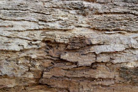 bark background texture: tree bark background texture pattern Stock Photo