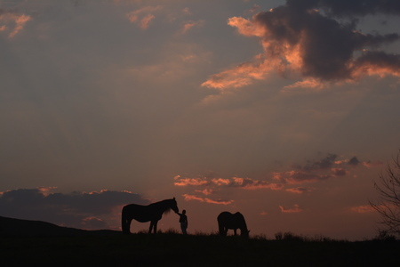Boy with horses at sunset