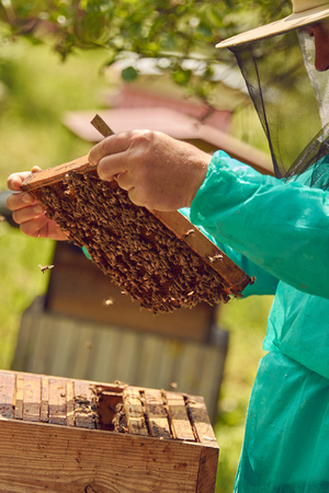 The beekeeper draws a honeycomb from the hive