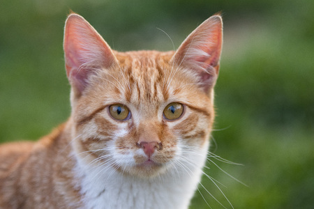 beautiful cat in the garden