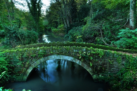 Stone Bridge in Jesmond Dene, Newcastle photo