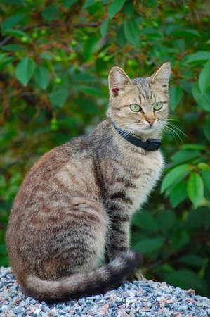 catlike: Green eye cat sitting on the gravel heap looking attentivly