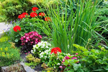 cranesbill: Geranium, pelargonium, cranesbill, begonia on the flowerbed Stock Photo