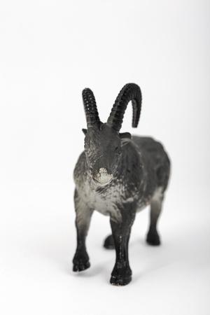 animal ram: plastic toy animal ram in white background