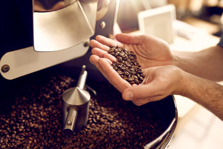 Cropped shot of a mans hands holding freshly roastd aromatic coffee beans over a modern machine used for roasting beans