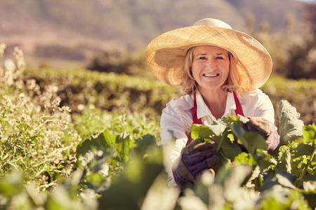 mujer rodillas: Portrait of a senior woman smiling at the camera wearing a straw hat, and surrounded by the fresh green leaves of many plants in her vegetable garden, with greenery in the background