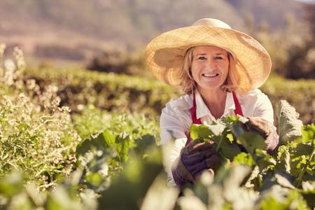 mujer arrodillada: Retrato de una mujer mayor sonriendo a la cámara que llevaba un sombrero de paja, y rodeado por las hojas verdes frescas de muchas plantas en su jardín vegetal, con vegetación en el fondo