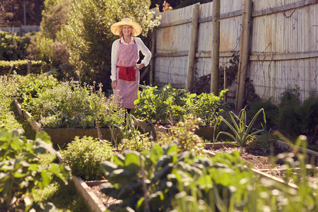 urban gardening: Smiling senior woman in hat and apron standing proudly in a lush and healthy urban food garden, with gentle sunlight