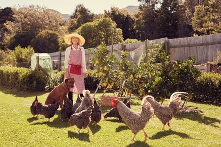 welfare plant: Full length portrait of a senior woman standing happily in her backyard, with her dog sitting beside her and a group of healthy free range chickens on the grass in front of her
