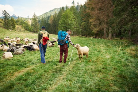 Two hikers walking by sheep in the outdoors