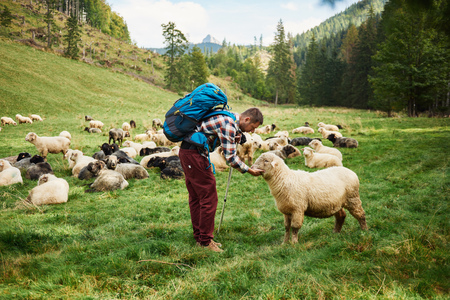 Hiker petting a sheep in the countryside