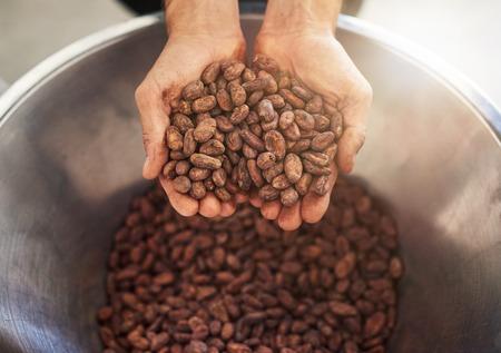 Werknemer met een handvol cacaobonen voor de productie van chocolade Stockfoto