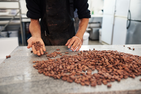 Worker sorting cocoa beans in an artisanal chocolate factory Stockfoto