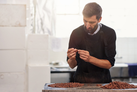 Worker examining cocoa beans for quality in a chocolate factory