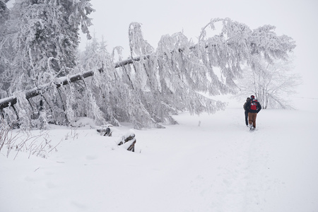 Couple hiking along a snowy forest trail in the wintertime